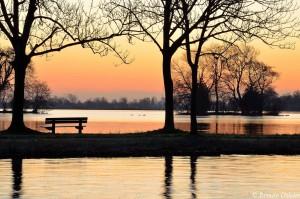 natuurfotografie zonsopkomst reeuwijkse plassen bank