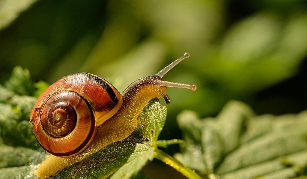 natuurfotografie macro slak Goudse Hout