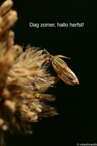natuurfotografie herfst Haagse Bos