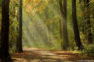 natuurfotografie zonneharpen haagse bos 2