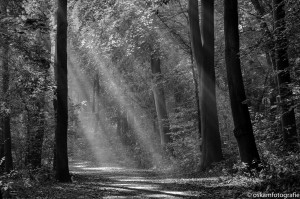 natuurfotografie zonneharpen haagse bos 3