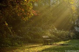 natuurfotografie zonneharpen haagse bos