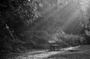 natuurfotografie zonneharpen haagse bos zwart wit