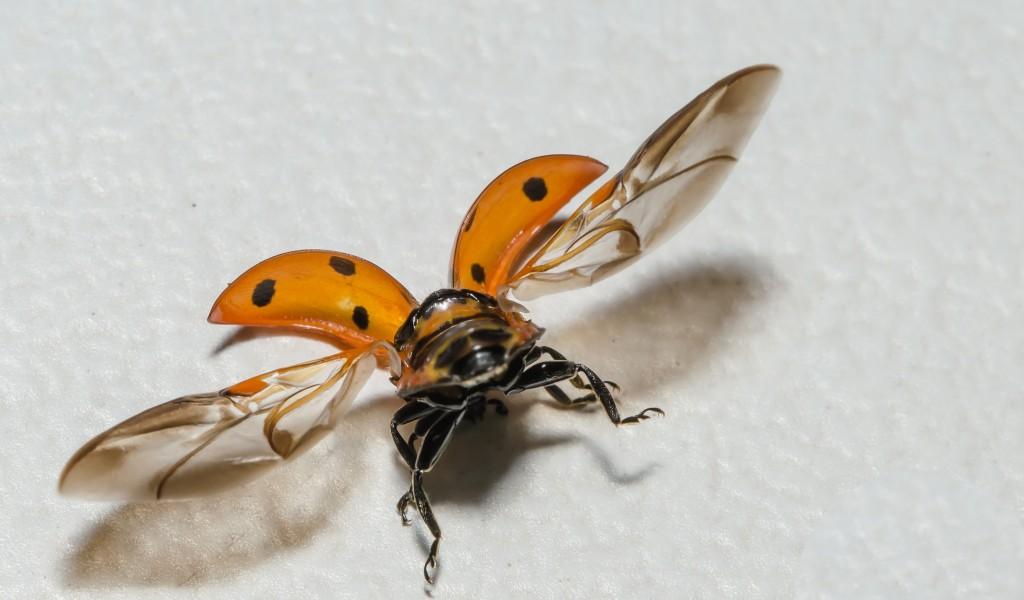 natuurfotografie macro lieveheersbeestje