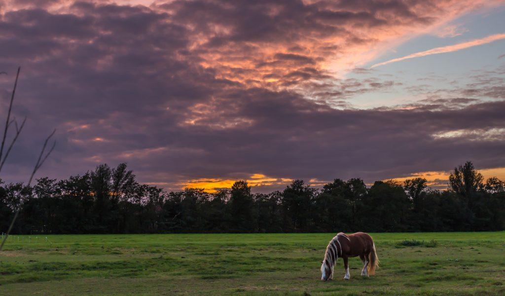 zonsondergang-manege-provinciale-weg-gouda-haastrecht