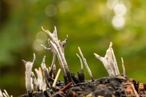 20191019- DSC0615-paddenstoelen zeist-2