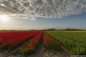 opdracht hollands landschap